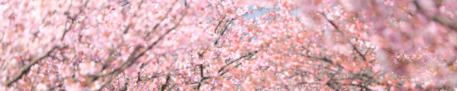 cherryblossomsaboutpage